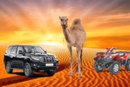 Morning Desert Safari Dubai Tour - 40% OFF Discount 1