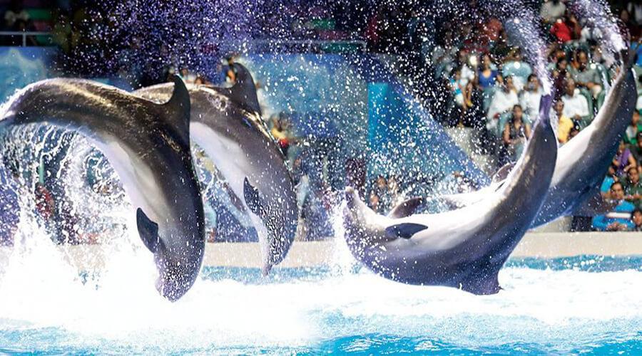 Dubai Dolphinarium Live Show